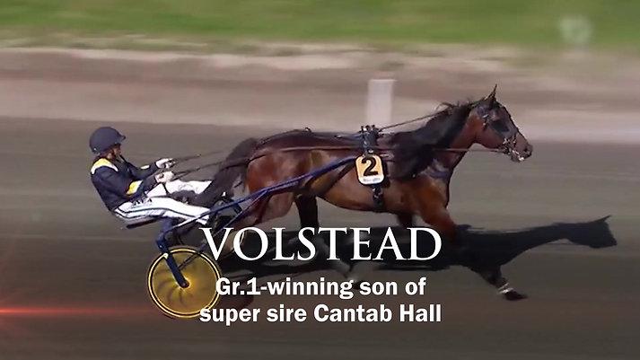 Volstead - 2019