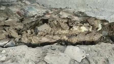 Poly-Foam Ant Infestation