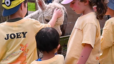 Meeting the Alpacas at camp