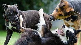 הרצאה דיגיטלית בזום - המדריך לגינת כלבים