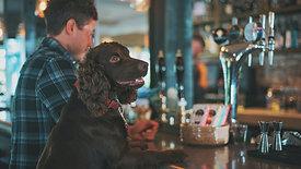 הרצאה דיגיטלית בזום - הכלב האורבני