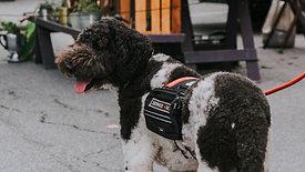 הרצאה דיגיטלית בזום - כלבי שירות