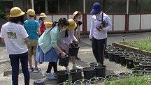 20200615菊定植
