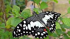 Beautiful Rainforest Butterflies