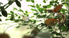 Butterfly in epic slow motion