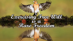 Exercising Free Will is a Rare Freedom - Part 2 - Interesting Articles for Interested People