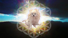 Watch Chapter 23 - Part 3 - Messages From the Ethers - Dancing Beyond Cancer - Pomeranian Video