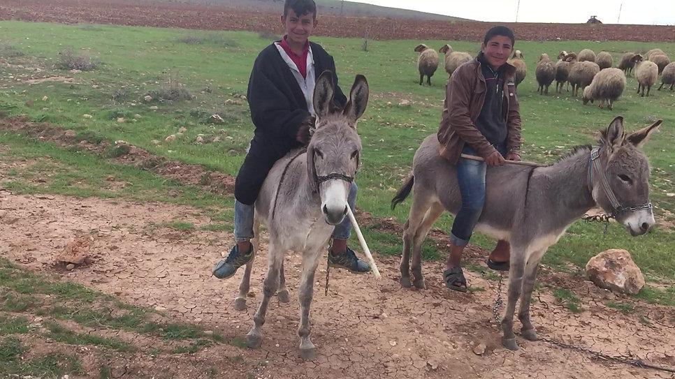 A Donkeys Life