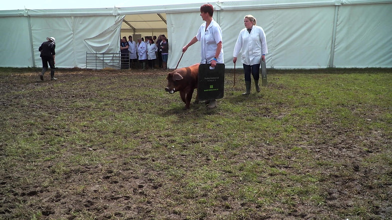 The Royal Cheshire Show 2019 Highlights