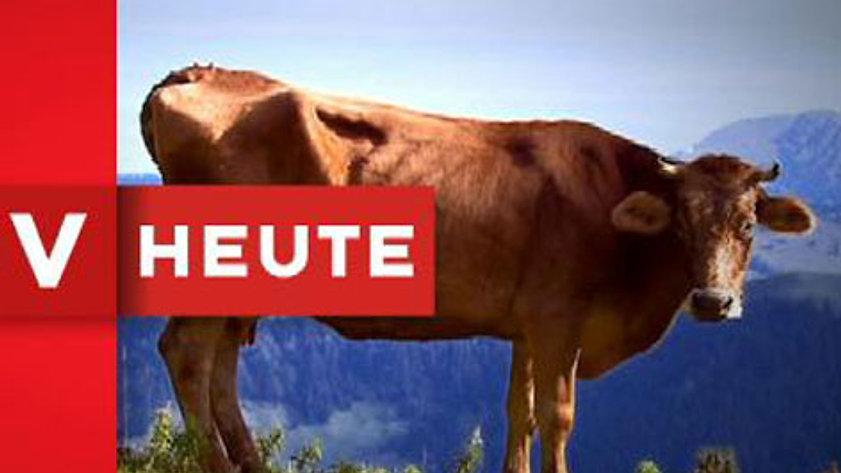 Vorarlberg Heute - Beiträge