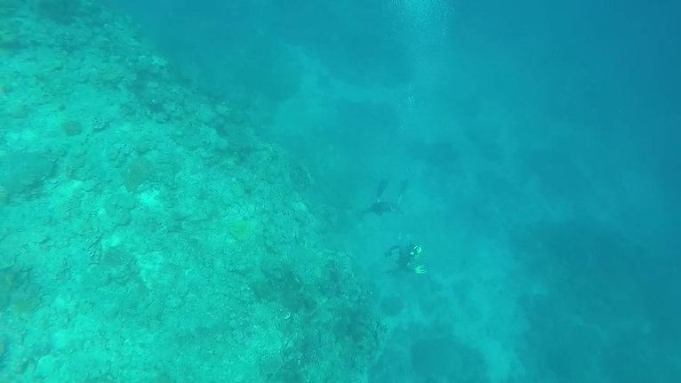 Free Diving in Fiji