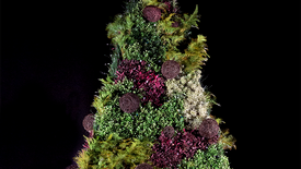 Sesc Quitandinha | Árvore de Natal