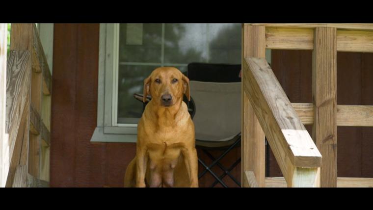 Murrays Kennel - Dog Training