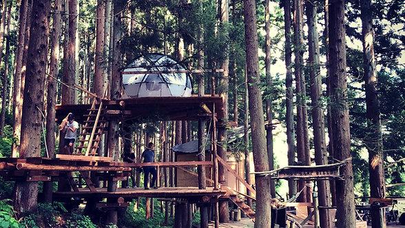 TREE CAMP DIY
