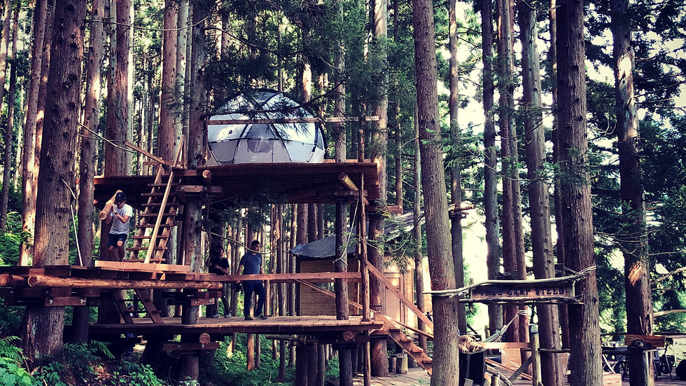 TREE CAMP DIY