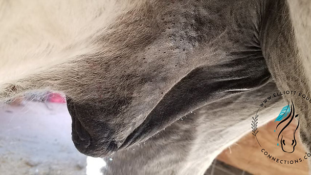 Elliott Equine Connections: Aimee's Blend-Sandflies