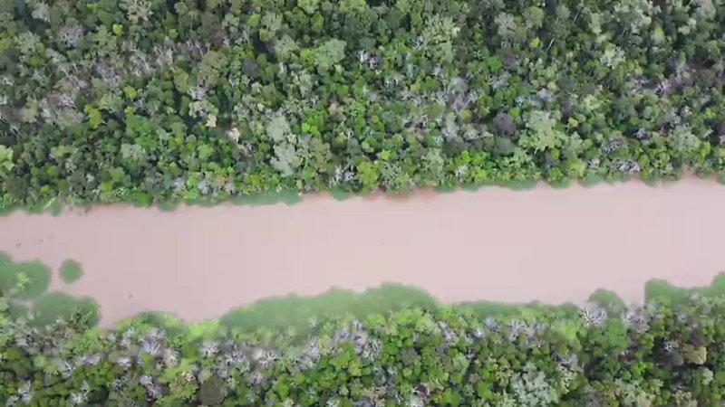 Tarapoto Amazonas Jungle Tours