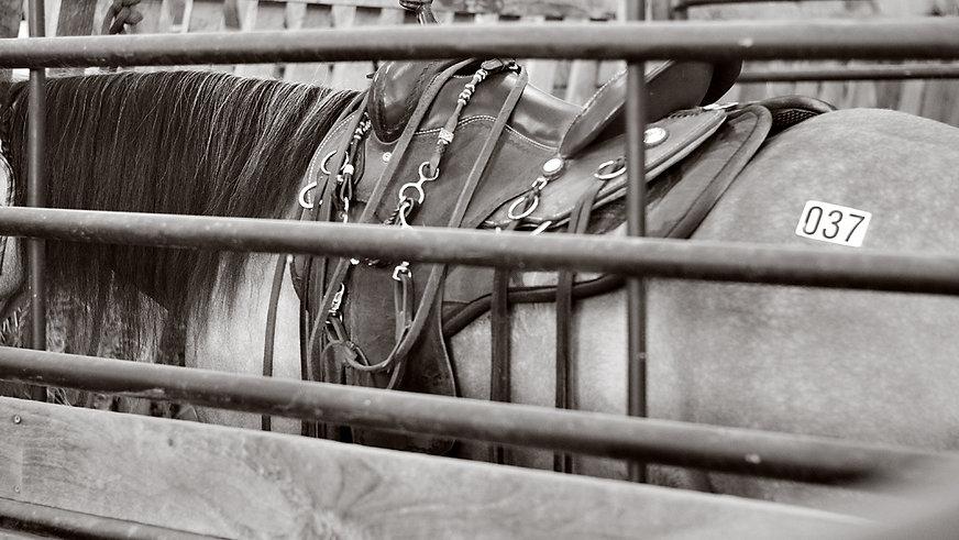 Southwest Horse Co