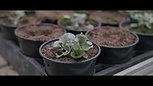 "Opleiding ""Plant"""