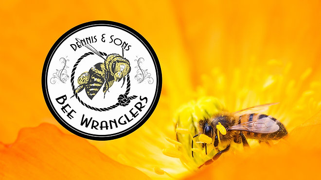 Bee Wranglers Videos - See us in Action