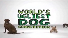 Worlds Ugliest Dog - Animal Planet
