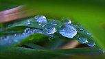 Silver Raindrops on Forest Leaves