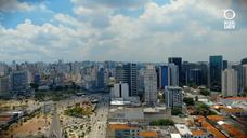 Floresta de Bolso Criando espaços verdes em São Paulo