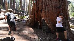 Nova's Nature Show - Episode 6 - Sequoias