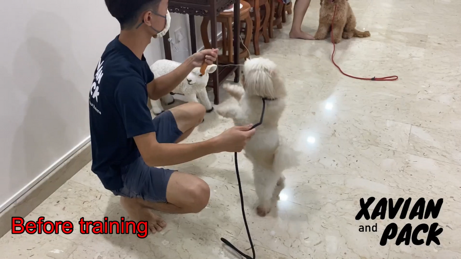 Jumping for food and overexcited interaction training