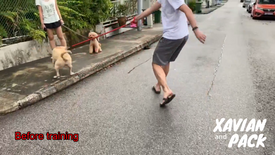 Pulling towards other dogs