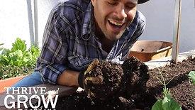 Building Healthy Soil