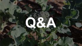 Winter Gardening Q&A