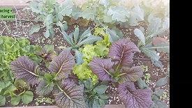 Fall Bonus Class: November Tips from the Garden