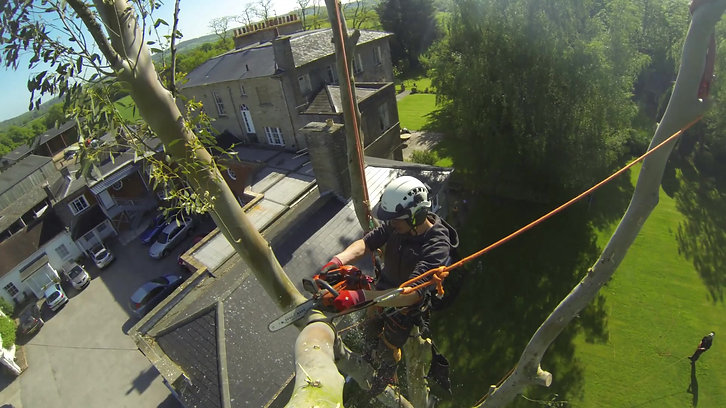A brief insight to a tree dismantle