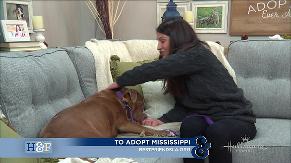 Mississippi: Best Friends Animal Rescue