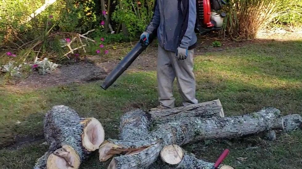 Tree job Oct 19 2018-1