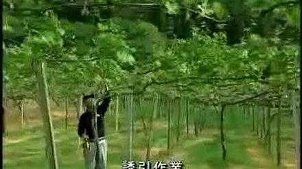 田主丸巨峰開植50周年記念