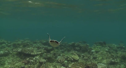 Turtle Miracles on Mon Repos