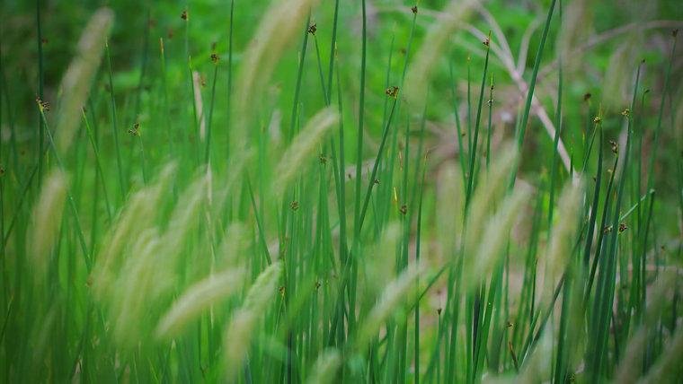 Basics of Spiritual Growth