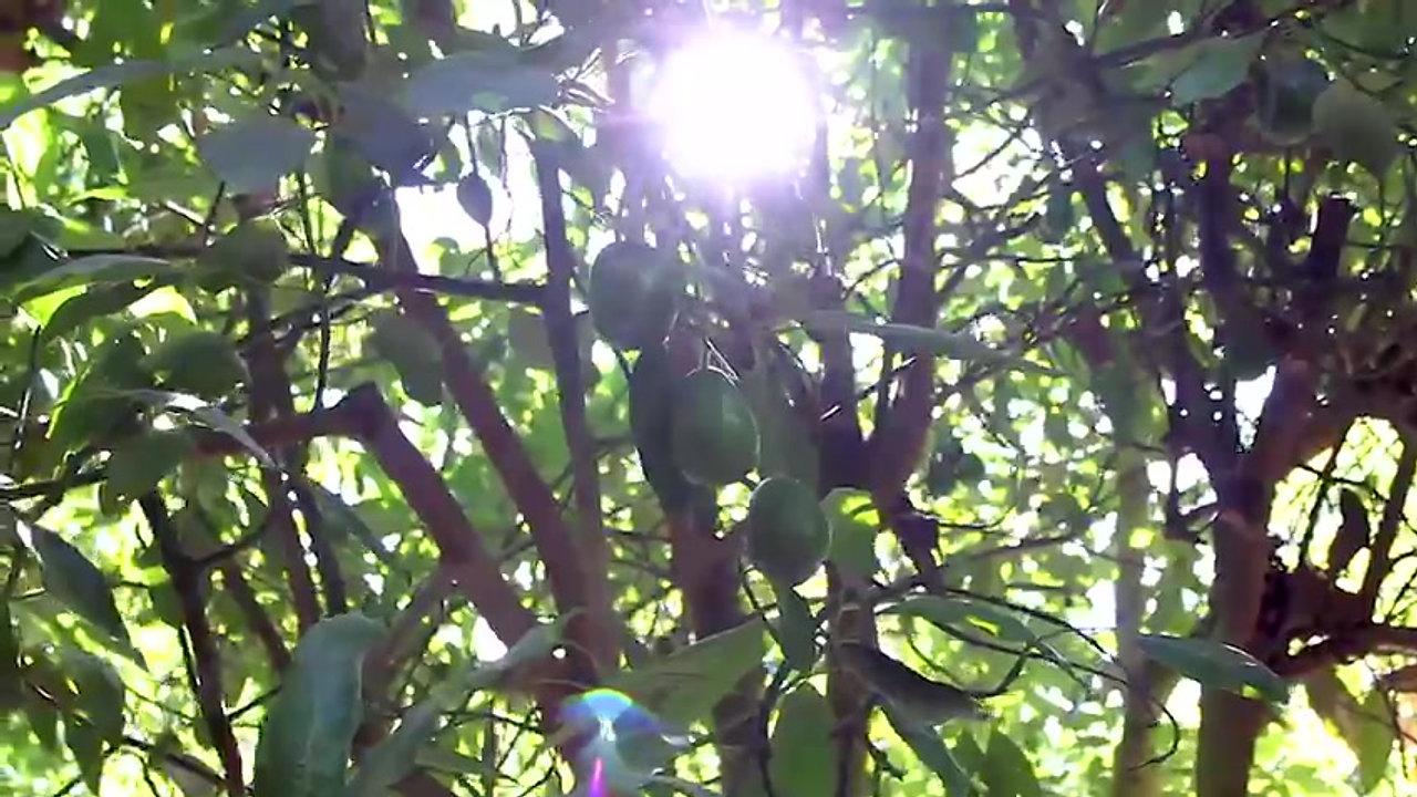 Guacamole PAD - Huertas