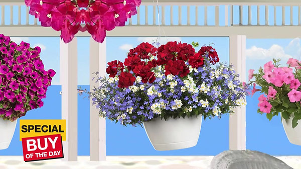 hanging baskets beach_updated picasso