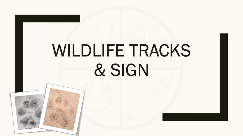 Wildlife Tracks & Sign sample lectures