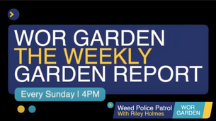 The Weekly Garden Report - Episode 6 - Weed Police Patrol - HD 1080p - HD 1080p