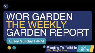 The Weekly Garden Report - Episode 4 - Feeding Wor Garden Wildlife