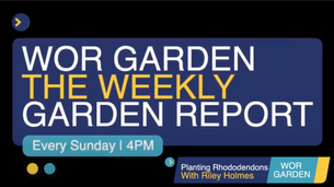 The Weekly Garden Report - Episode 5 - Planting Rhododendrons