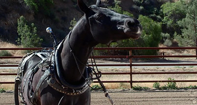 A Dog And Pony Show | Production Designer