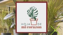 Hoja de mi Corazon