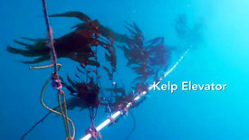 Transforming Kelp into Jef Fuel with Diane Young Kim