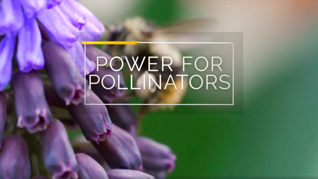 Power For Pollinators
