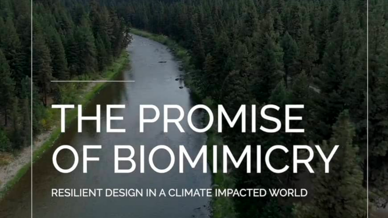 The Promise of Biomimicry